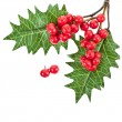 Red berries holly with leaves isolated on white — Stock Photo #13837066