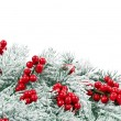 Christmas fir decoration with red berries isolated on white — ストック写真