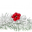 Christmas fir decoration with red berries isolated on white — Stock Photo #13837076