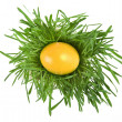 Easter egg in the middle of a green nest on white background - Стоковая фотография