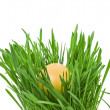Easter egg in the middle of a green nest on white background - ストック写真