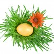 Golden Easter eggs in the green nest isolated on white background — Stock Photo #13837335