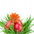 Color Easter eggs in the green nest on white background — Stock Photo #13837347