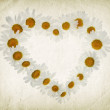 Chamomiles heart on the old paper — Stock Photo