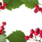 Hawthorn decoration — Stock Photo #13837757