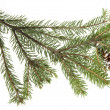 Stock Photo: Evergreen fir tree branch on white for design