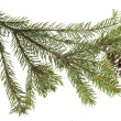 Evergreen fir tree branch on white for design — Stock Photo