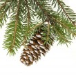 Evergreen fir tree branch on white for design — Photo #13838078