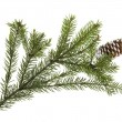 Fir tree branch isolated on white — Stok fotoğraf