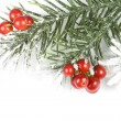 Christmas branch with red berries on white — Stock Photo #13838090