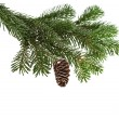 Evergreen fir tree branch on white for design — Foto Stock