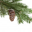 Evergreen fir tree branch on white for design - Foto Stock