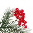 Christmas branch with red berries on white — Stock Photo #13838226