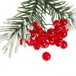 Christmas branch with red berries on white - Stockfoto