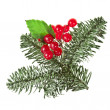 Christmas branch with red berries on white — Stock Photo #13838240