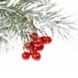 Christmas branch with red berries on white — Stock Photo #13838256