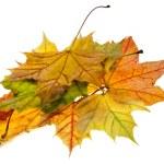Autumn leave maple isolated on white background — Stock Photo #13838688