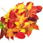 Autumn leave maple isolated on white background — Stock Photo #13838693