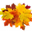 Royalty-Free Stock Photo: Beautiful autumn maple leaves over white
