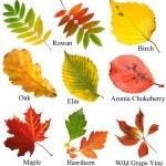 collezione autunno colorato bello lascia con nome, isolato su sfondo bianco — Foto Stock