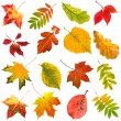 Collection beautiful colourful autumn leaves isolated on white background — Stock Photo #13838891