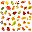 Collection beautiful colourful autumn leaves isolated on white background — Stock Photo #13838930
