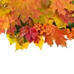 kart üzerinde beyaz renkli sonbahar yaprakları — Stok fotoğraf #13838937