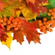 Colorful autumn leaves, card on white — Stock Photo #13838938