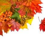 kart üzerinde beyaz renkli sonbahar yaprakları — Stok fotoğraf #13838953