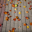 Autumn maple leaves on the sidewalk — Stock Photo #13838971