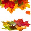 Border frame of colorful autumn leaves isolated on white — Stock Photo #13838997