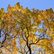 Tree with autumn leaves against sky - Stock Photo