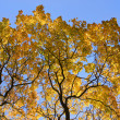Tree with autumn leaves against sky - Stok fotoğraf