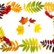 Royalty-Free Stock Photo: Autumn decoration of leaves and rowan berries to your text
