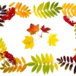 Stock Photo: Autumn decoration of leaves and rowberries to your text