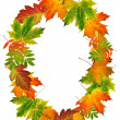 Stock Photo: Letter O made of autumn leaves
