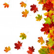 Border frame of colorful autumn leaves isolated on white — Stock Photo #13839187
