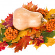 Pumpkin in Colorful autumn leaves isolated on white — Stock Photo