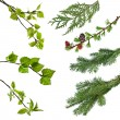 Branches of various trees and shrubs with leaves - Stock Photo