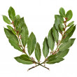 Laurel wreath isolated on white — Stock Photo #13839523