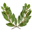 Laurel wreath isolated on white - Stock Photo
