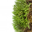 Green moss isolated on white — Stock Photo #13839706