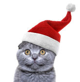 Christmas cat in red Santa Claus cap on a white background — Stock Photo