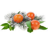 Tangerine with fir twig isolated on a white background — Stock Photo