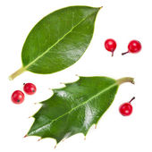 Leaves of european holly (Ilex aquifolium) isolated on white — Stock Photo