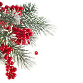 Christmas fir decoration with red berries isolated on white — Stok fotoğraf