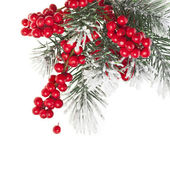 Christmas fir decoration with red berries isolated on white — Stock Photo