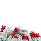 Картинки на белом фоне с природой
