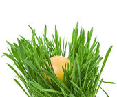 Easter egg in the middle of a green nest on white background — Stock Photo