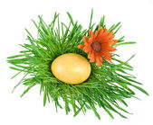 Golden Easter eggs in the green nest isolated on white background — Stock Photo